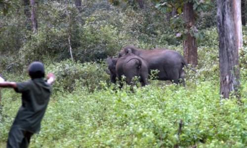 Anamalai Wildlife Sanctuaery